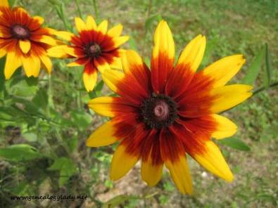 A flower in Warwick