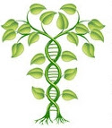 1079809-Clipart-3d-Green-DNA-Crop-Gene-Modification-Helix-Plant-Royalty-Free-Vector-Illustration